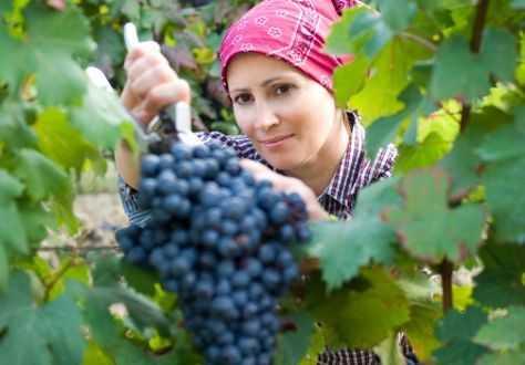 incontro_imprenditoria_femminile_agricoltura-474x330